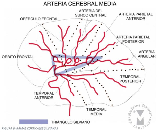 Medicina Vascular / intervencionismo minimamente invasivo